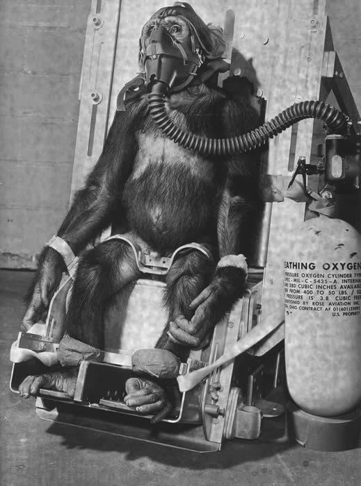 chimp_oxygen