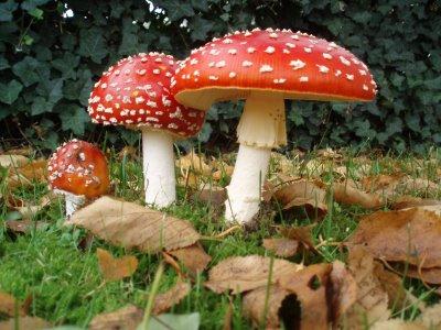 magic-mushrooms1
