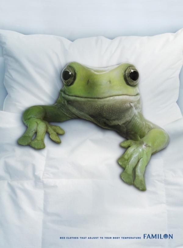 frog in bed sleeping