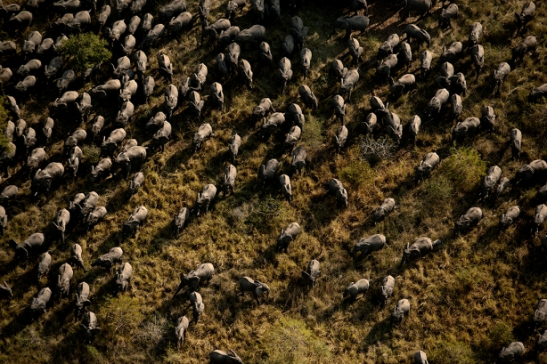 Zakouma National Park: Combating Poaching
