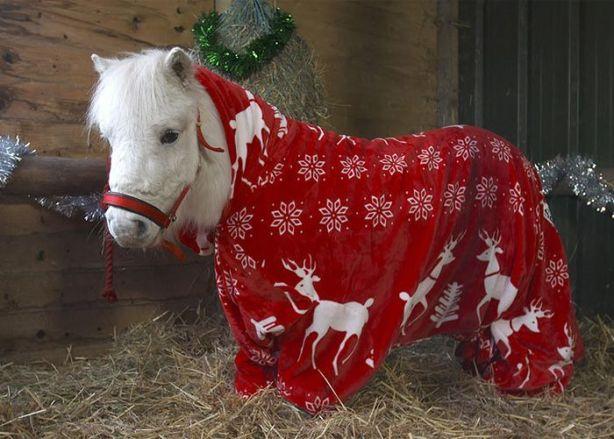 foursie-onesie-shetland-pony-daffy-41