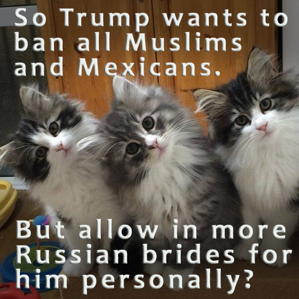 trump-catsn copy