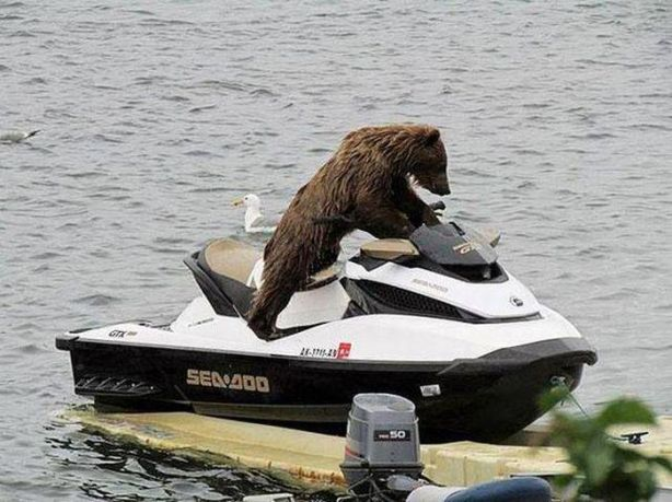 when-stealing-a-jet-ski-wear-a-bear-costume-so-no-one-does-anything