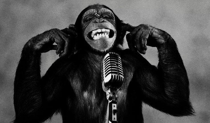 Monkey-e1459809544527.jpg