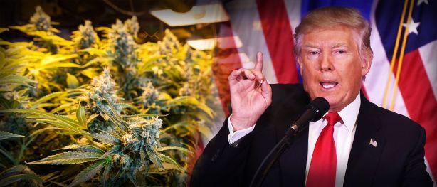 no-one-assume-trump-will-soft-marijuana