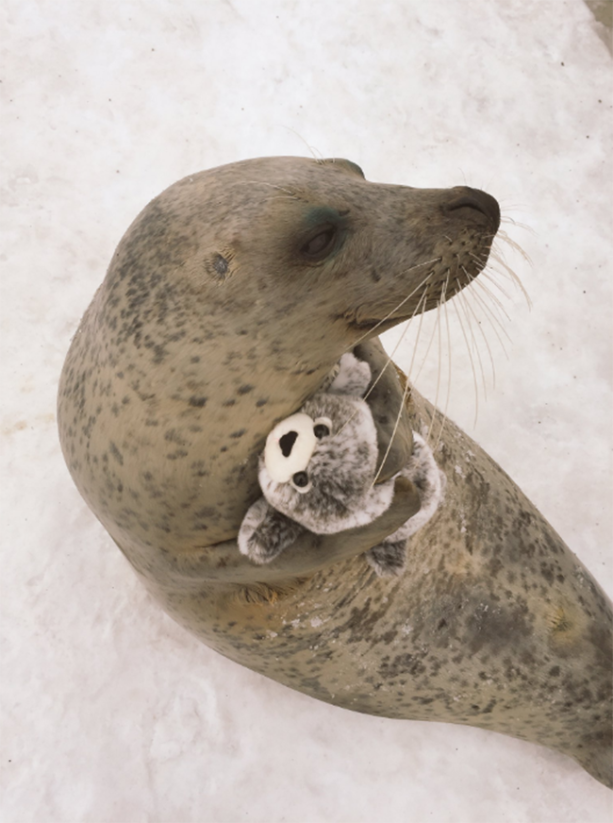 seal-hugs-toy-seal