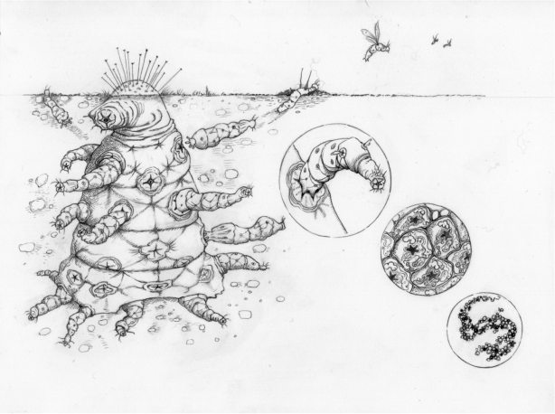 171102-octomite-full (1)
