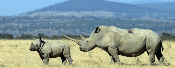 homepage-hero-white-rhino.jpg